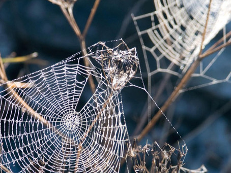 How to Get Remove Spiders from Your Home