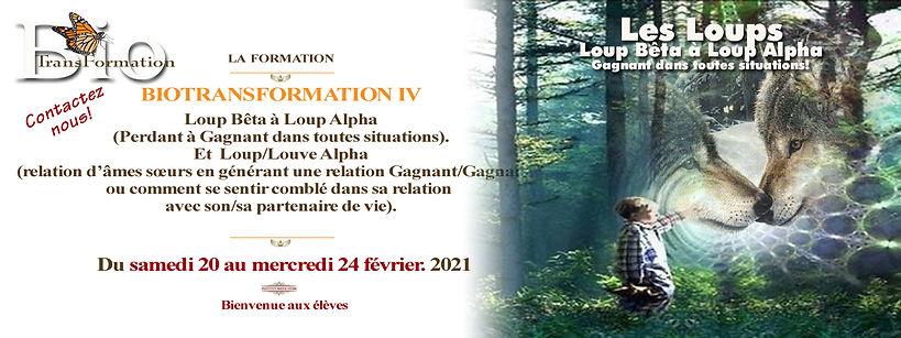 Biotransformation IV loup 30 - 24 fevrie