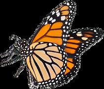 Monarch%20logo%20transparent%20%2C%20fav