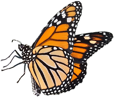 Monarch%20logo%20transparent%20%2C%20fav