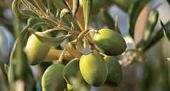Secrets d'Epiciers Fournisseur Epicerie Fine Hhuiles d'Olive et Vins de Domaine