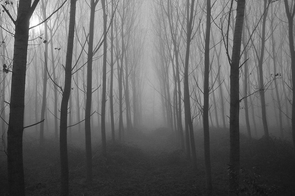 spookytrees.jpg