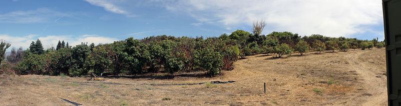 pano of trees.jpg