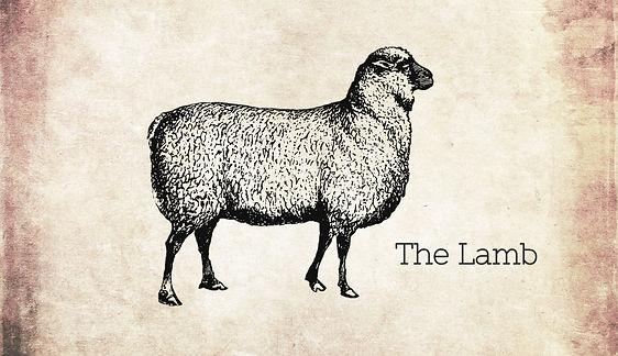 Sheep2_edited_edited.jpg