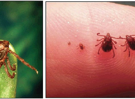 Ticks: Why You Should Keep Your Pets Safe