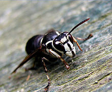 Buzz Off: How to Protect Yourself From Stinging Insects