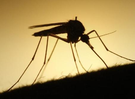 Mosquito Season? Things To Know