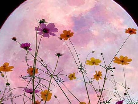 Full Flower Super Moon:  Get Ready for What is Revealed!
