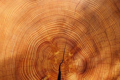 wood-3212803_1920_edited.jpg