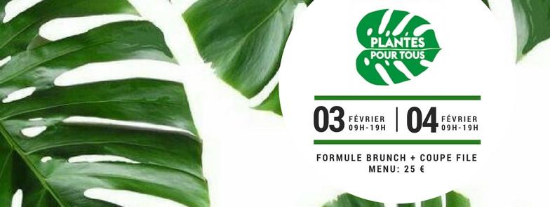 PLANTES POUR TOUS CAFE A VENTE DE PLANTES PARIS 10EME BRUNCH