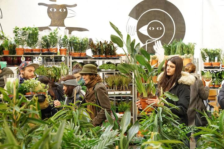 Grande vente de plantes #5