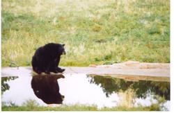 Bear 001.jpg