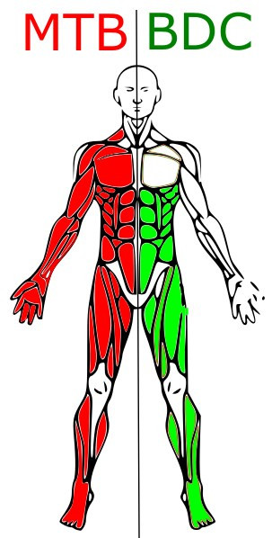 Muscoli MTB vs BDC