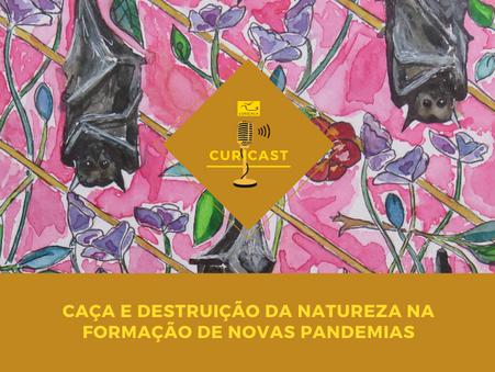 Instituto Curicaca lança podcast sobre a relação entre caça, zoonoses e pandemias