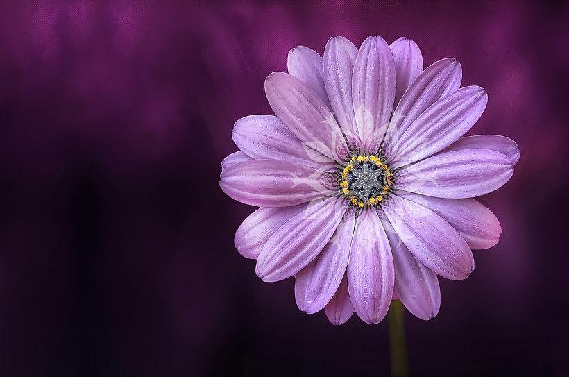 background_chama_violeta.jpg