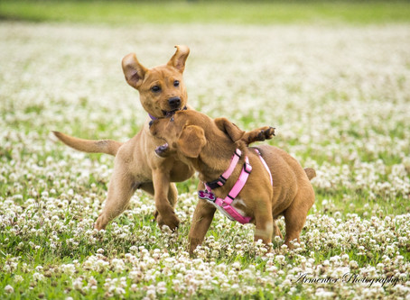 6 Ways to get your Pet ready for SPRING!