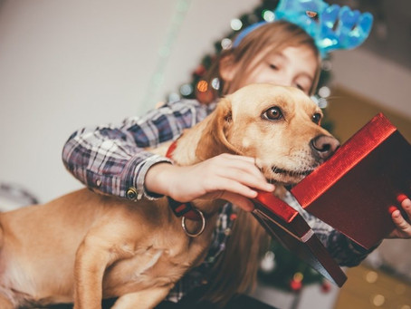 Fun & Meaningful Gifts for Pet Owners