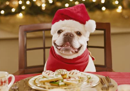 Adorable Holiday Traditions with your Pet