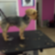 Dog-trimming-300x300 9.png