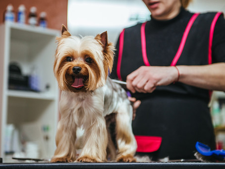 WHY IS IT IMPORTANT TO GET YOUR DOG GROOMED REGULARLY?