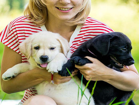 The Importance of Socializing a New Puppy- What, When Where?
