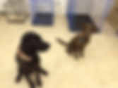 Finished-dogs-300x225 10.png
