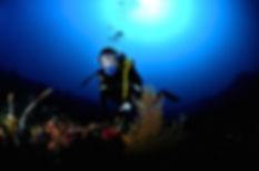 Valéry PLATON - Photographe sous-marin