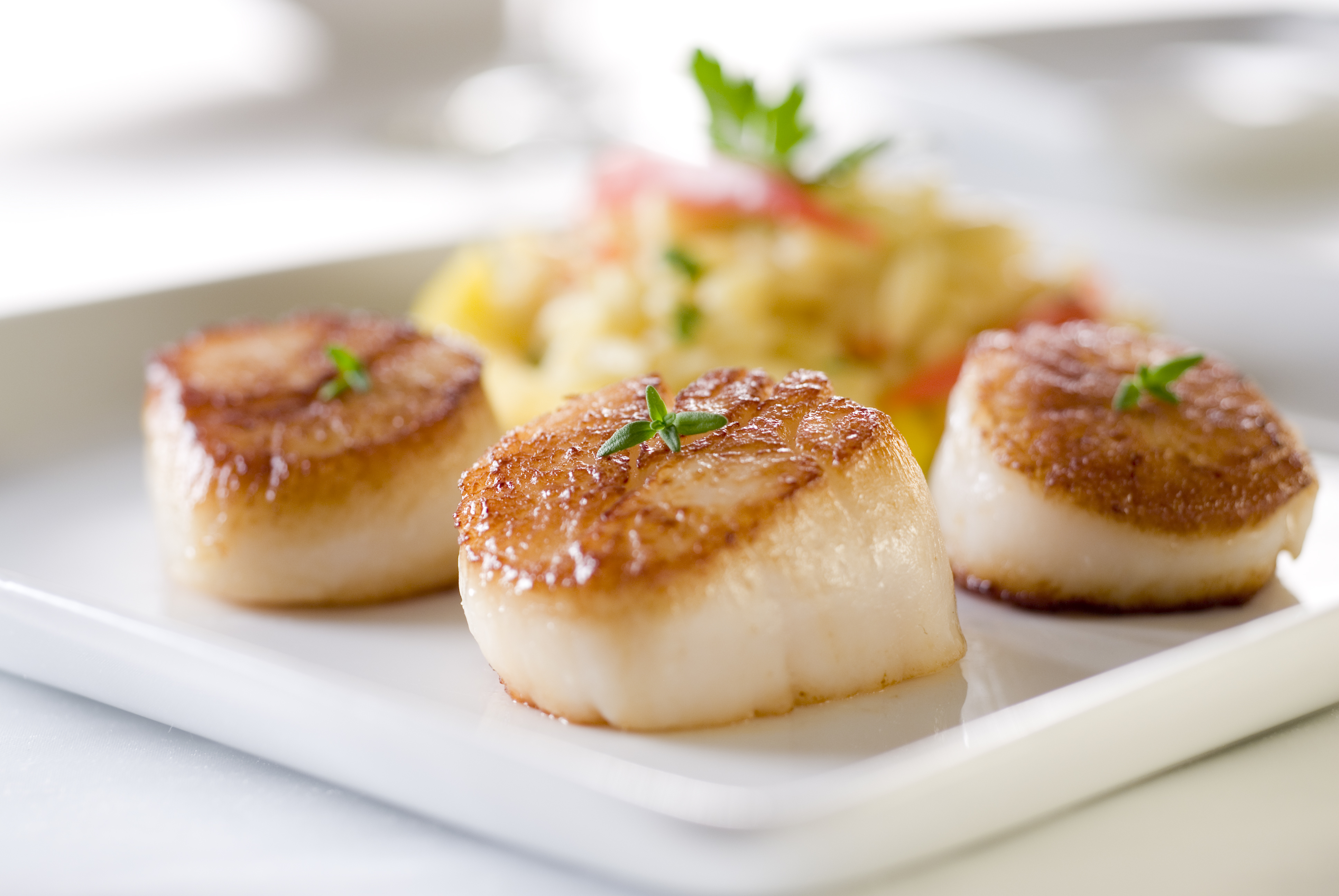 Seared sea scallops with orzo and vegeta