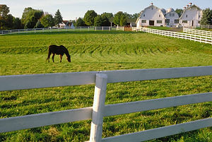 horse farm photo website 2020.jpg