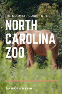 The ultimate guide to the North Carolina Zoo
