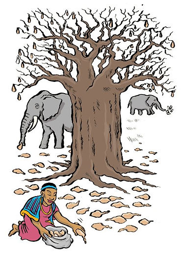 Baobab Tree cartoon.JPG