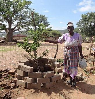 Baobab seedling.JPG