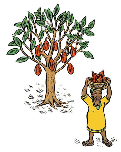 Raw cacao tree cartoon.JPG