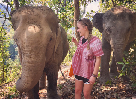 Thai Elephants Thrilled To Hear They Appear In 1 Out Of Every 4 Dating App Profiles!