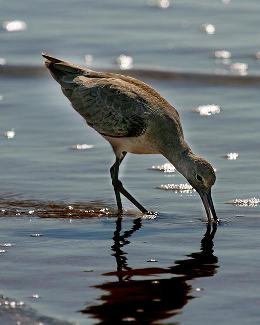 BIRDS VILLANO62.jpg