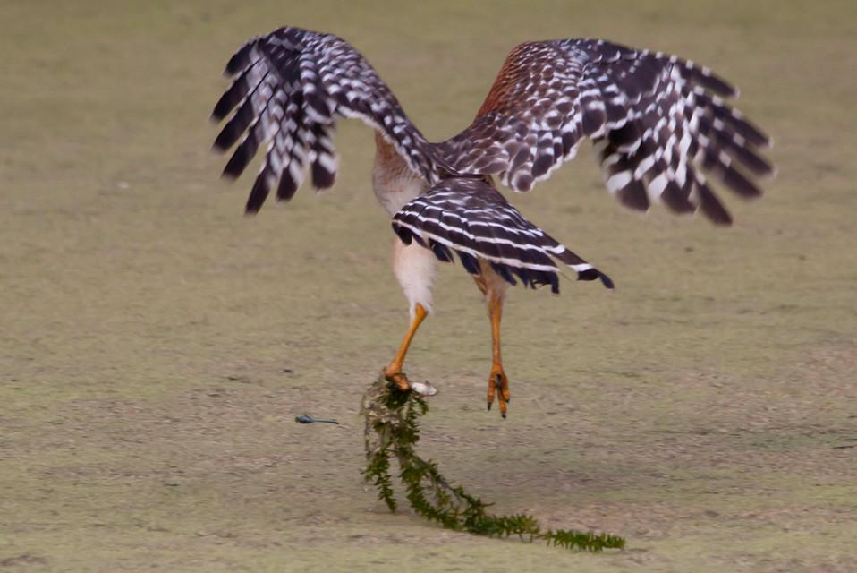 BIRD IG 3.JPG