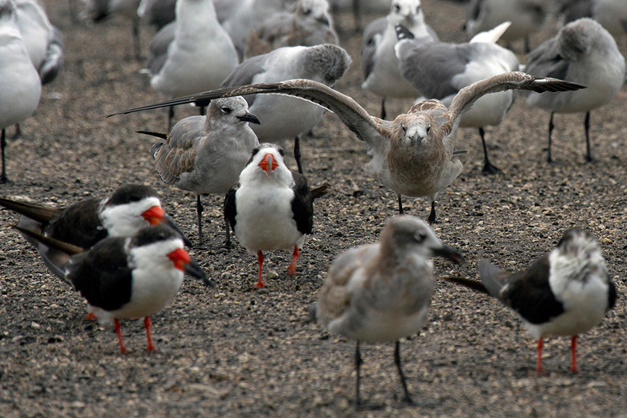 BIRD CONVENTION.jpg