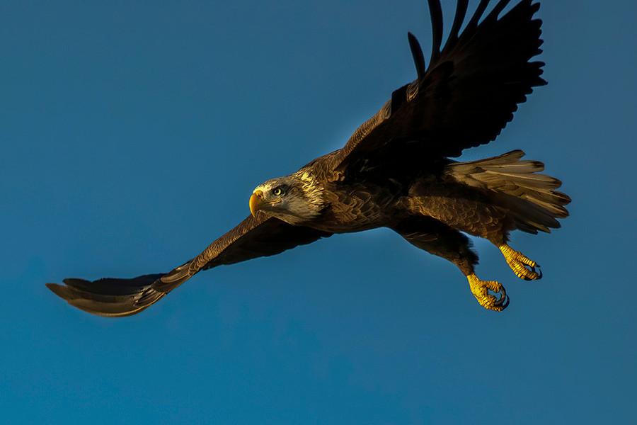 EAGLE GIGA 5.jpg