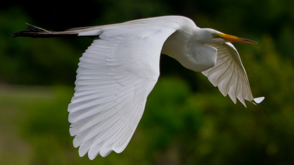 BIRDS IG3.JPG
