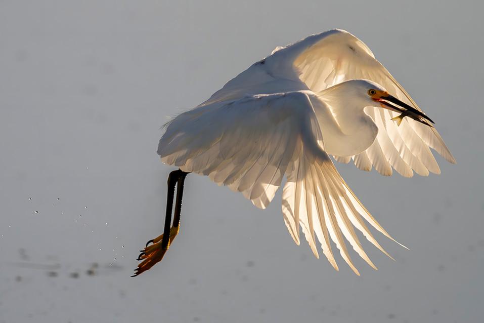 BEST BIRD CROPPED.jpg