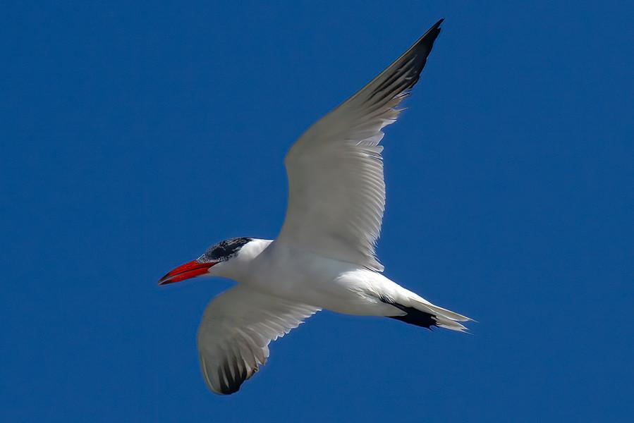 BIRDS VILLANO 9.jpg
