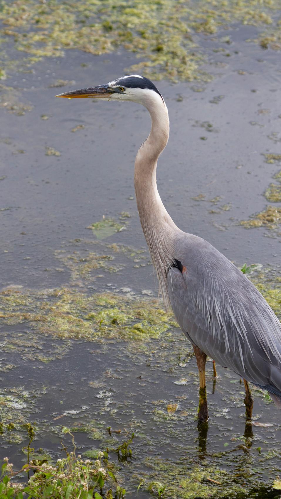 BIRDS IG 18.JPG