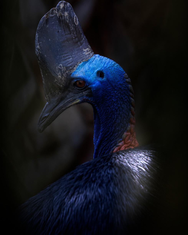 KILLING BIRD.JPG