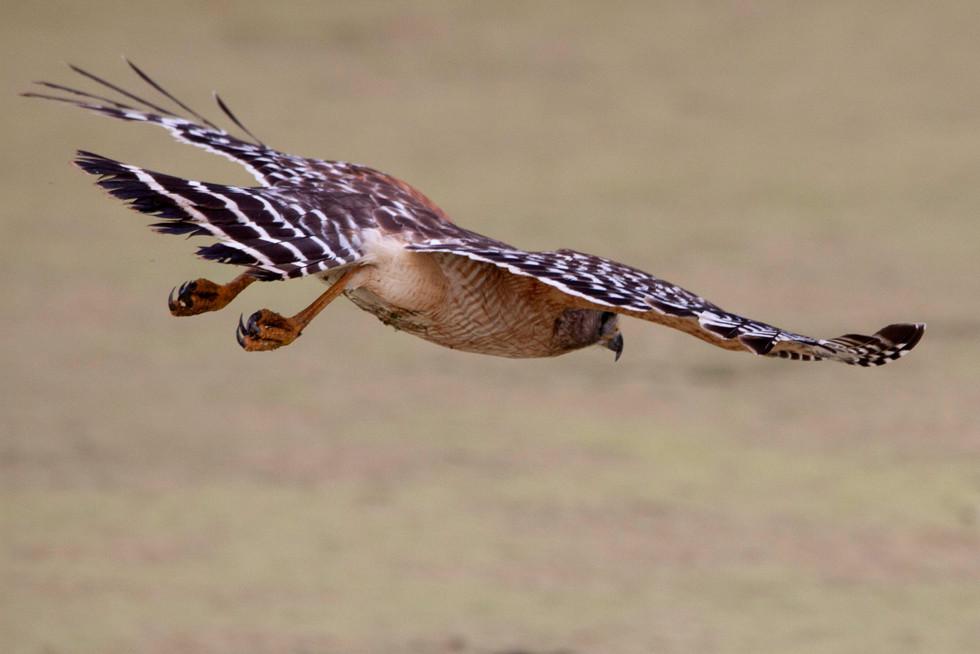 BIRD IG2.JPG