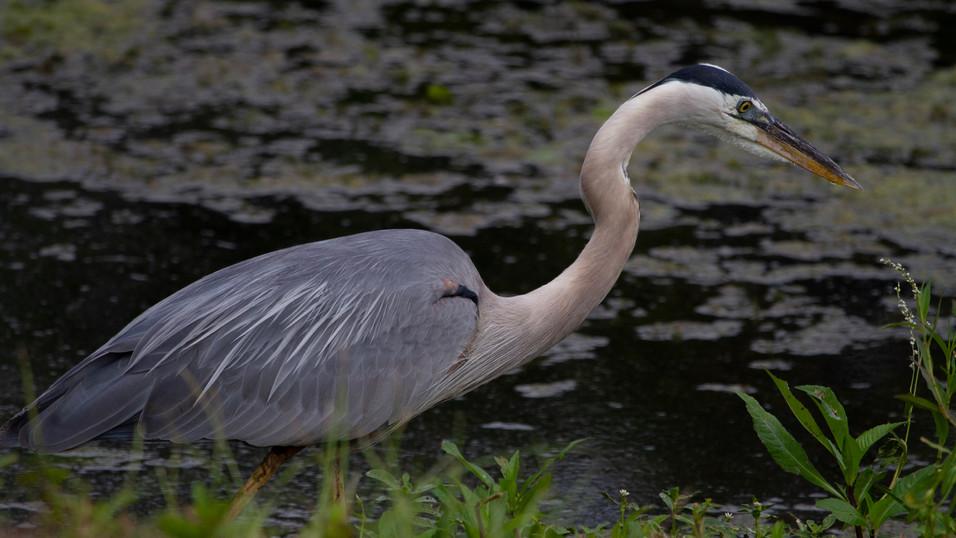 BIRDS IG 13.JPG