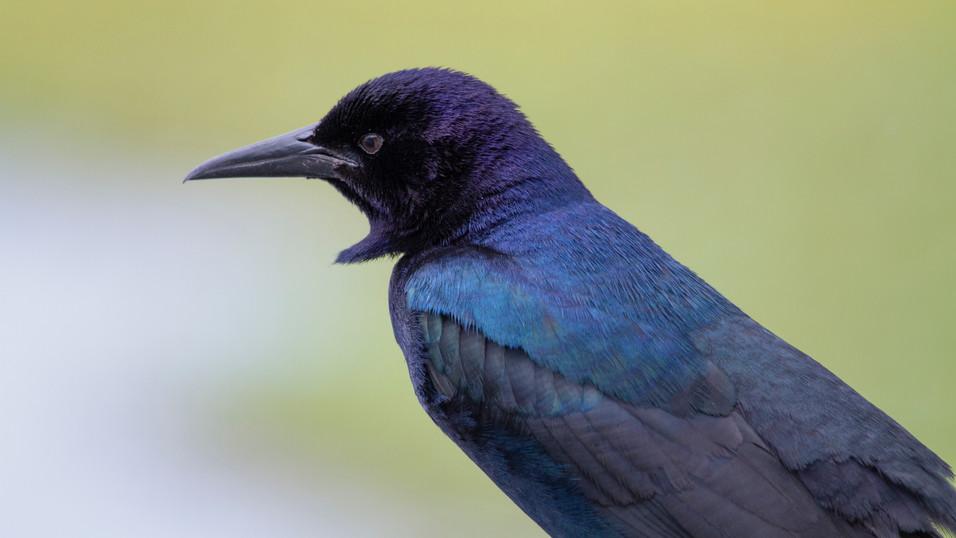 BIRDS IG 8.JPG
