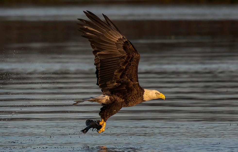 EAGLE CATCH 4 FB.jpg