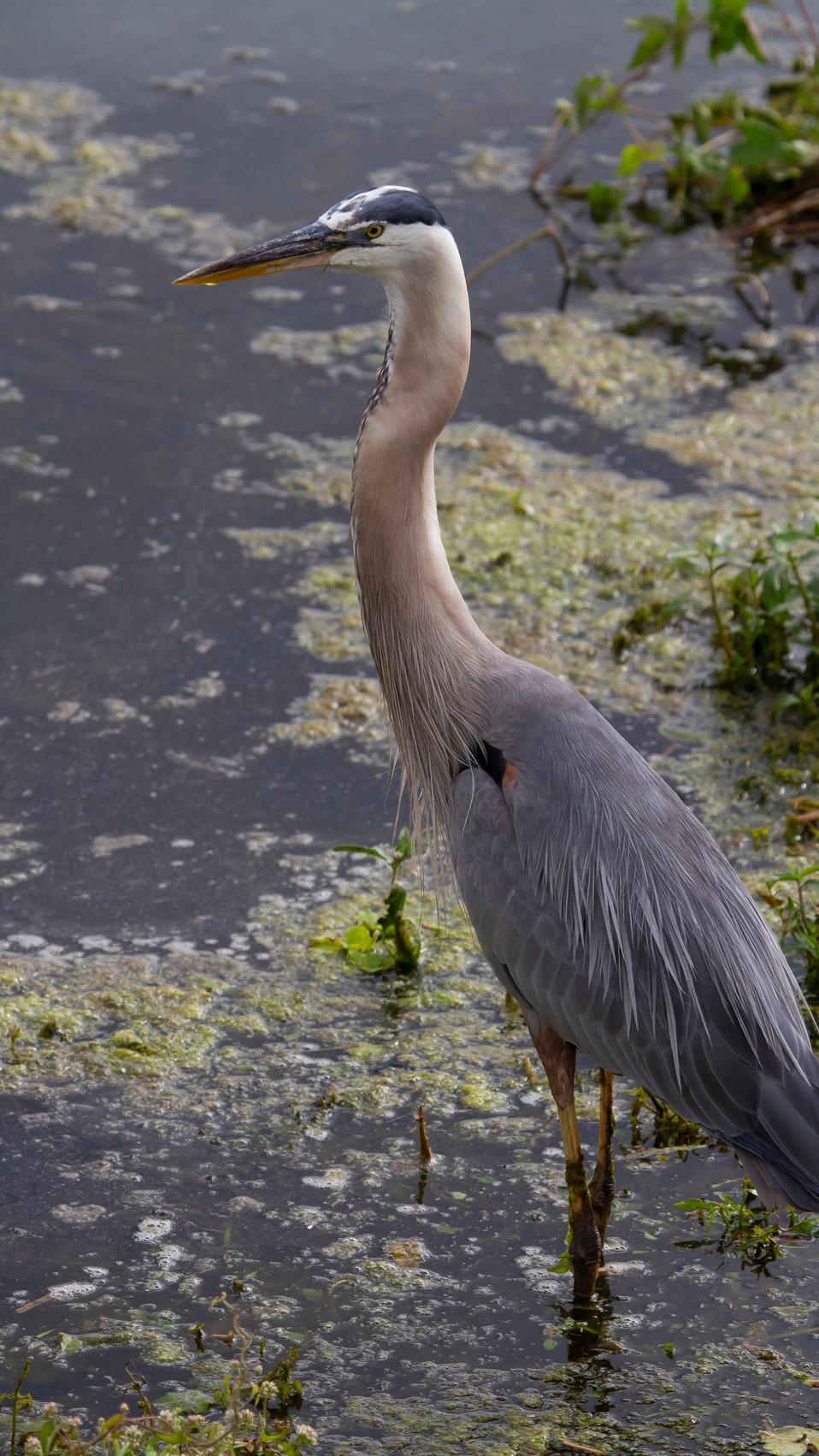 BIRDS IG 17.JPG
