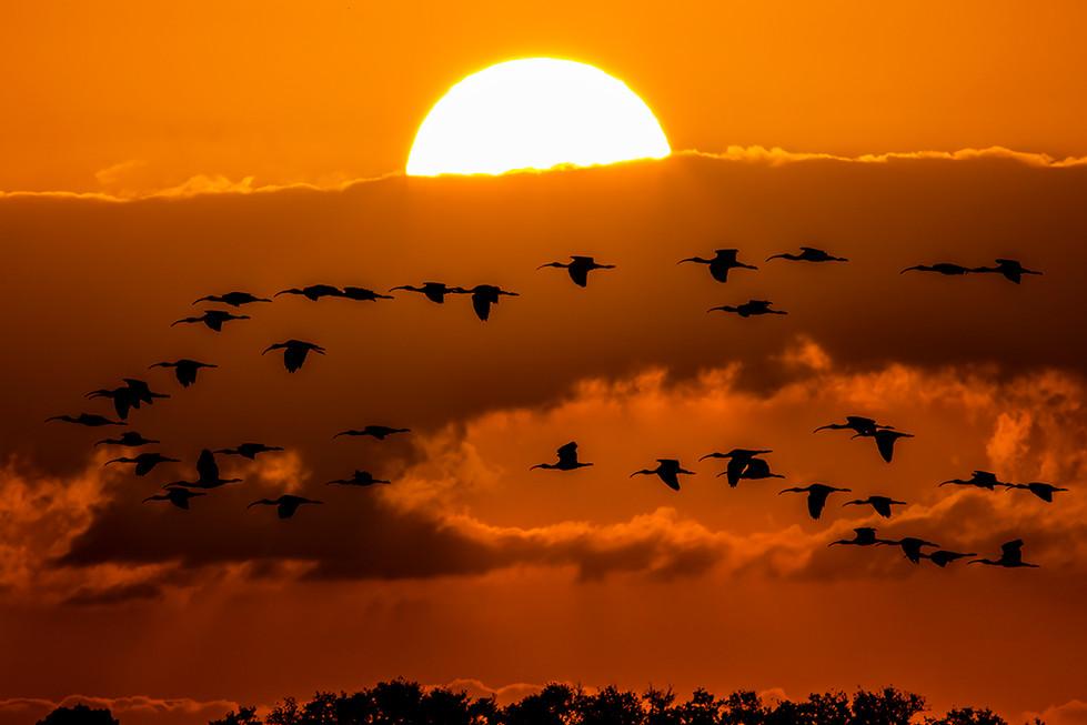 BIRDS SUNSET 2.JPG