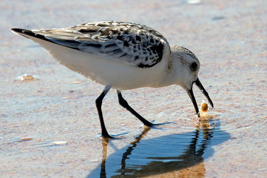 BIRD FISH.jpg
